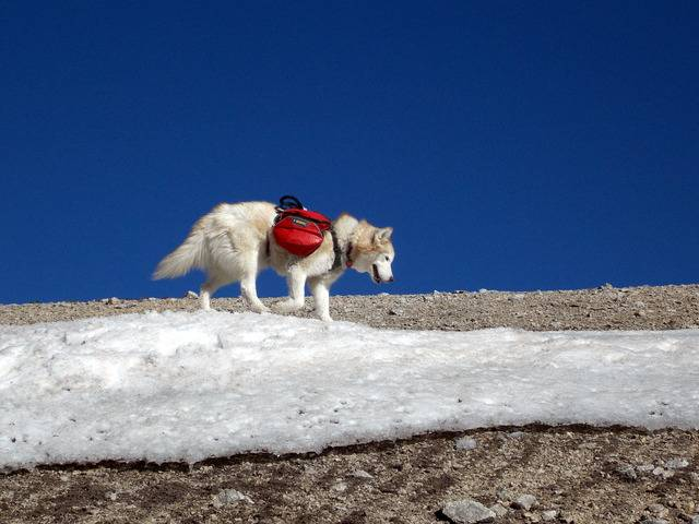 Hiking with dogs~Peak 9- 13,195ft & Peak 10- 13,633ft ~ Colorado DSCN2745