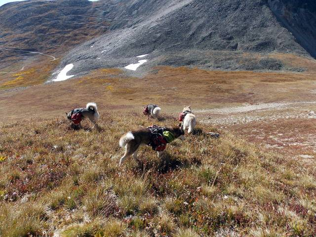 Hiking with dogs~Peak 9- 13,195ft & Peak 10- 13,633ft ~ Colorado DSCN2747