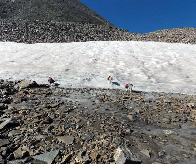 Hiking with dogs~Peak 9- 13,195ft & Peak 10- 13,633ft ~ Colorado DSCN2753