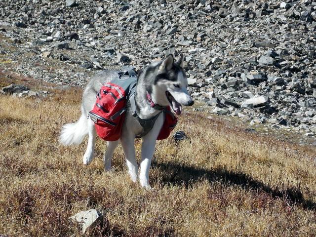 Hiking with dogs~Peak 9- 13,195ft & Peak 10- 13,633ft ~ Colorado DSCN2757