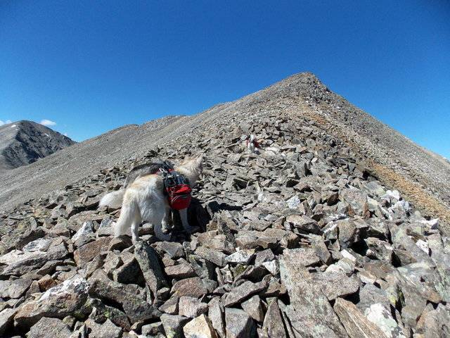 Hiking with dogs~Peak 9- 13,195ft & Peak 10- 13,633ft ~ Colorado DSCN2787