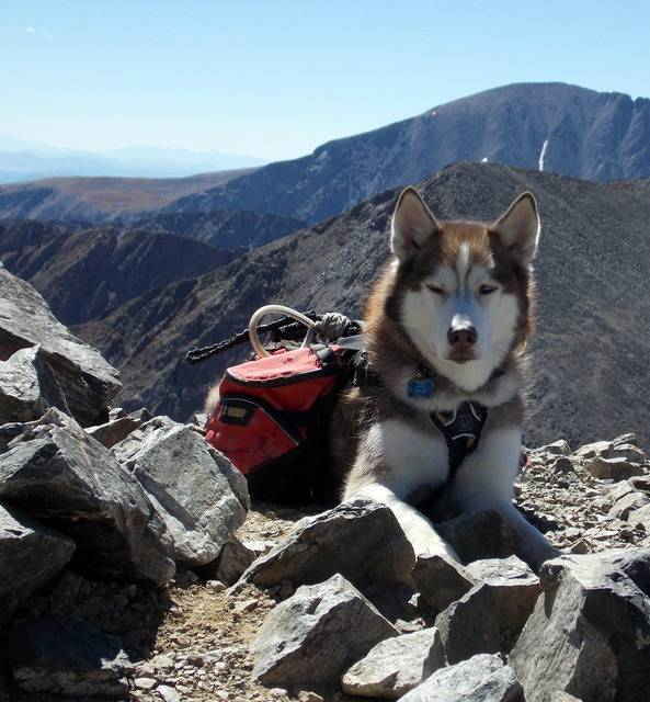 Hiking with dogs~Peak 9- 13,195ft & Peak 10- 13,633ft ~ Colorado DSCN2817