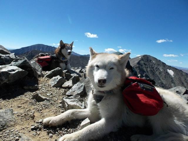 Hiking with dogs~Peak 9- 13,195ft & Peak 10- 13,633ft ~ Colorado DSCN2825