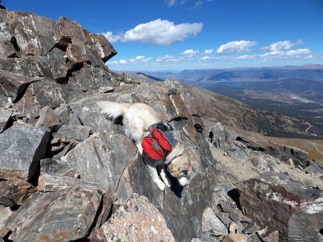 Hiking with dogs~Peak 9- 13,195ft & Peak 10- 13,633ft ~ Colorado DSCN2840