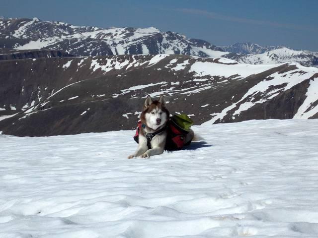 Hiking with Dogs~ Mt. Cameron, 14,238ft and Bross, 14,172ft DSCN3597