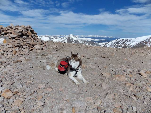 Hiking with Dogs~ Mt. Cameron, 14,238ft and Bross, 14,172ft DSCN3632