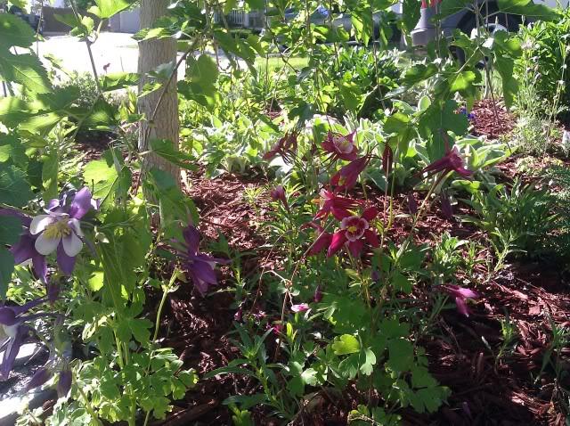 Jenn's Gardening Thread-2012 - Page 2 IMG_20120504_084647