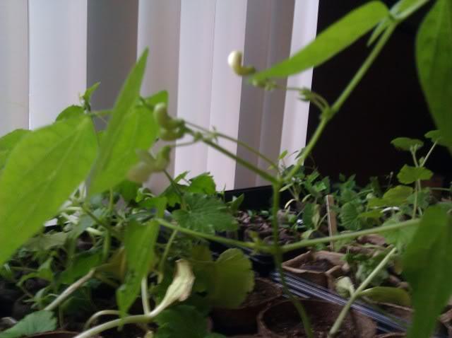 Jenn's Gardening Thread-2012 - Page 2 IMG_20120507_085458