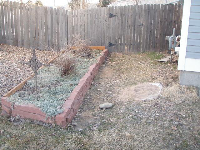 Jenn's Gardening Thread-2012 - Page 2 P3120461