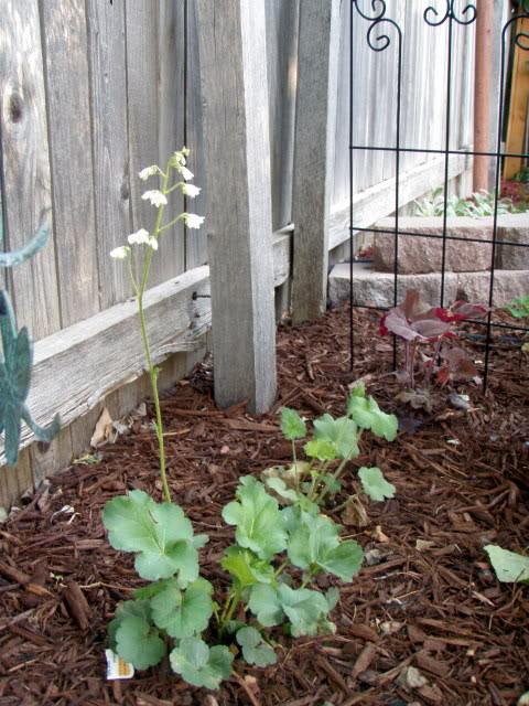 Jenn's Gardening Thread-2012 - Page 2 P5140719