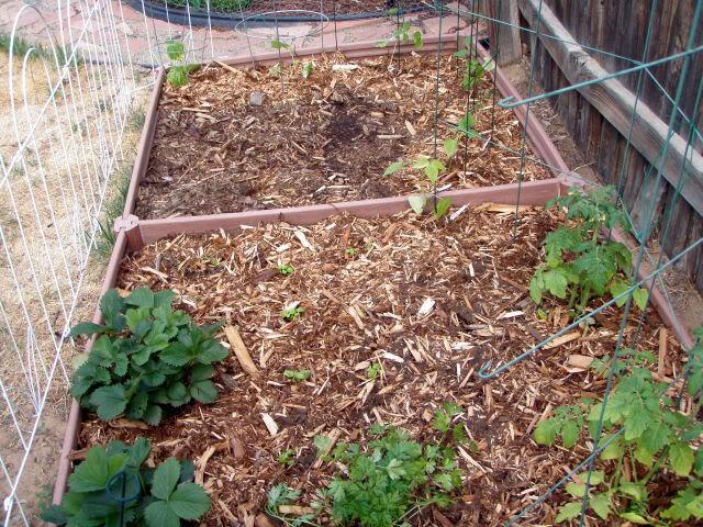 Jenn's Gardening Thread-2012 - Page 2 P5160722