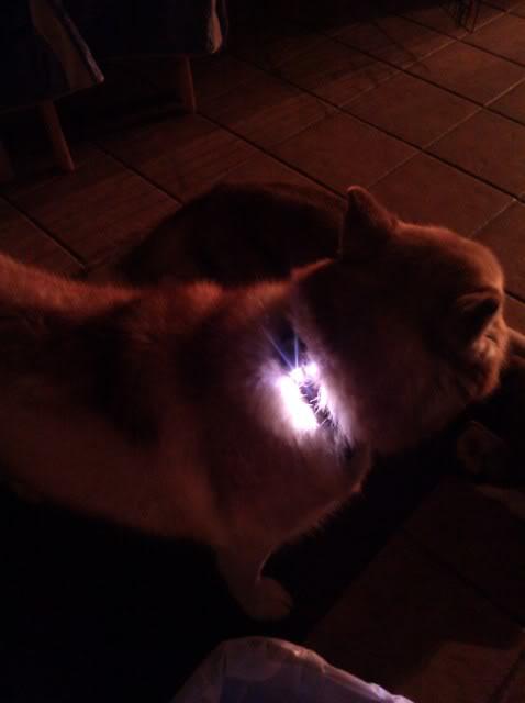 collar lights! IMG_20110517_214018