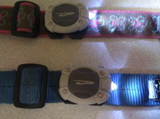 collar lights! IMG_20110517_214825
