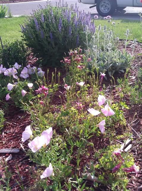 Tori's Gardening Thread? IMG_20110610_075548