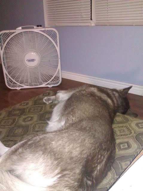 Show me your sleeping husky! IMG_20120330_212956-2