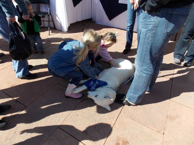 Rescue Event this past weekend with North Star Sib rescue 2012-01-01000000-39