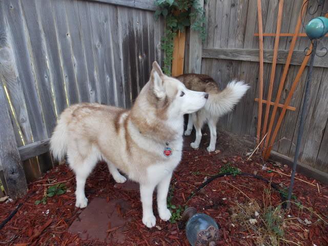 Sierra, Jack & Finn - Page 4 2012-07-20070020