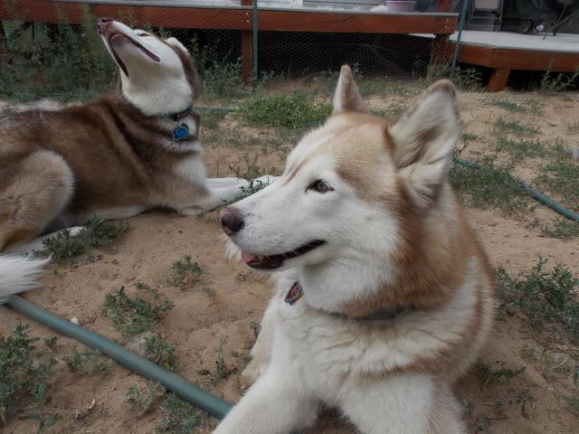 Sierra, Jack & Finn - Page 4 2012-08-01185002