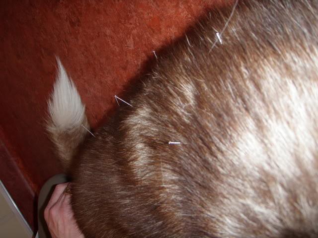Jack got acupuncture/ up date 4/11/12 P5181173