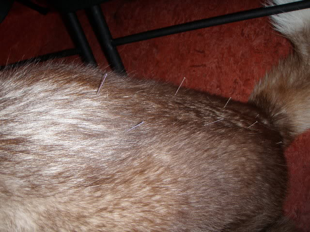 Jack got acupuncture/ up date 4/11/12 P5181175