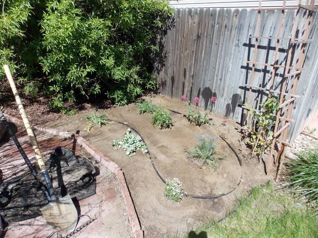 Jenn's 2015 Gardening thread DSCN1748