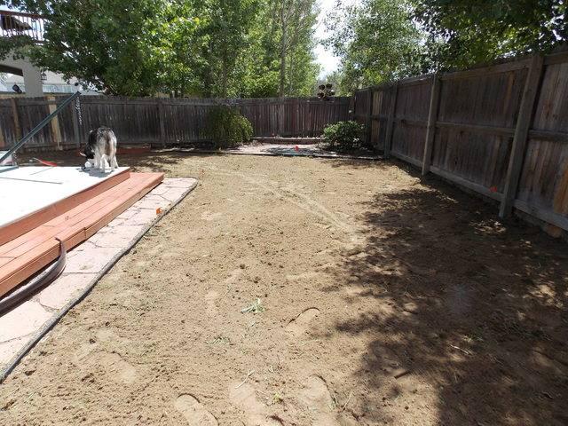 Jenn's 2015 Gardening thread DSCN1755