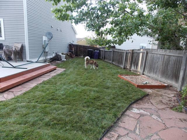 Jenn's 2015 Gardening thread DSCN1762
