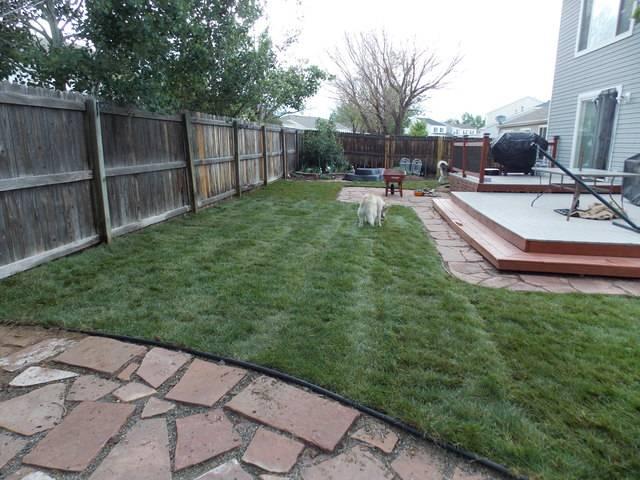Jenn's 2015 Gardening thread DSCN1763
