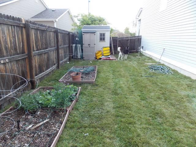 Jenn's 2015 Gardening thread DSCN1765