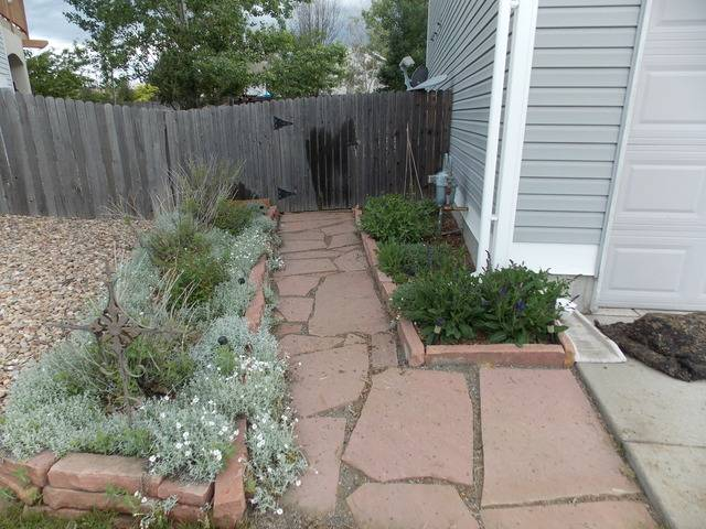 Jenn's 2015 Gardening thread DSCN1772