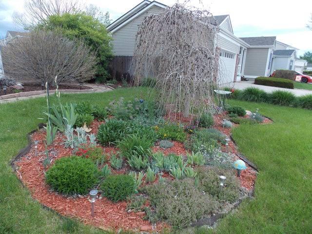 Jenn's 2015 Gardening thread DSCN1774