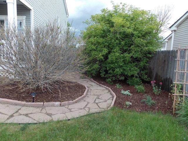 Jenn's 2015 Gardening thread DSCN1776