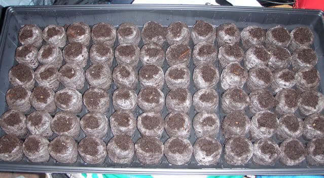 Jenn's Gardening Thread---what will this summer bring-2011 - Page 2 Starting_seeds