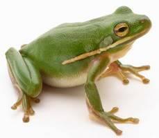 S kim potajno ljubuješ? - Page 2 Frog