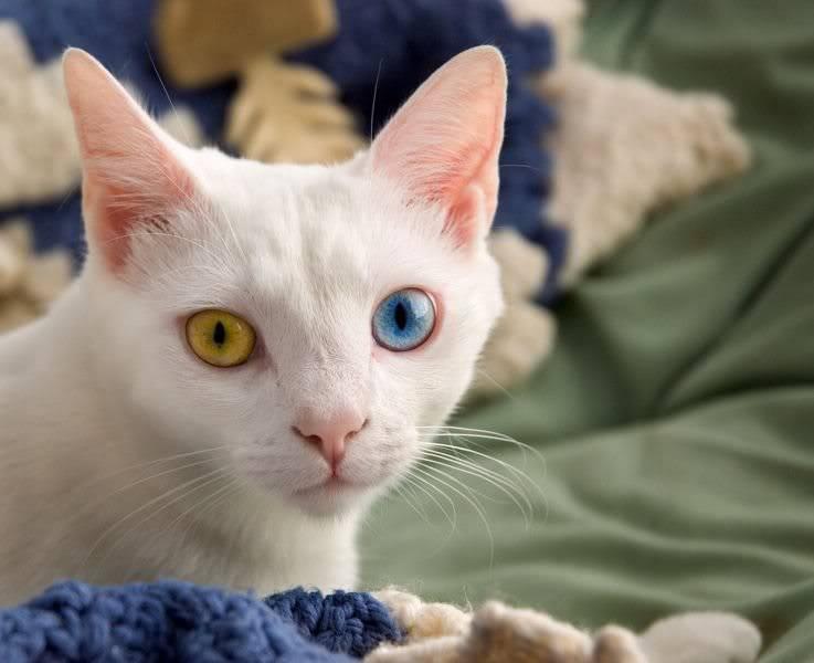 Eyes Of  Billa...! Seniorbilla