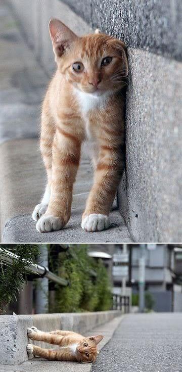 Geniun Cat...! Untitled-2
