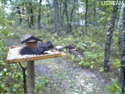 Deer Trail Cam from Minnesota Snap394