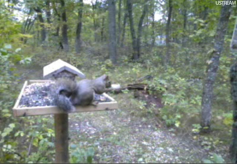 Deer Trail Cam from Minnesota Snap411