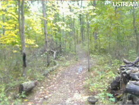Deer Trail Cam from Minnesota Snap412