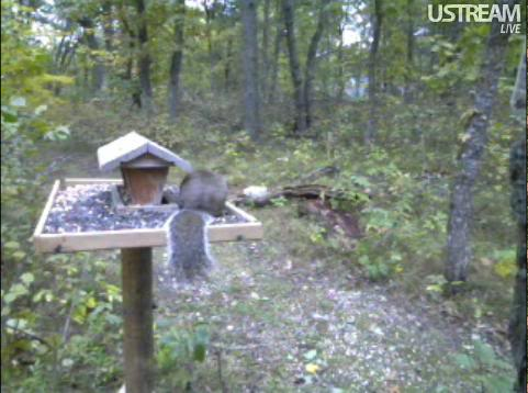 Deer Trail Cam from Minnesota Snap414-1