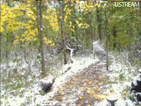 Deer Trail Cam from Minnesota Snap422