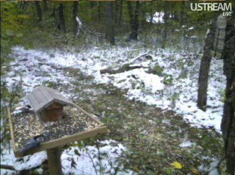Deer Trail Cam from Minnesota Snap430
