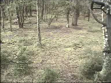 Fallow Deer Cam from New Forest (Lyndhurst, UK) Warning!!! You will see animal corpses here! 091008082700-01-37442