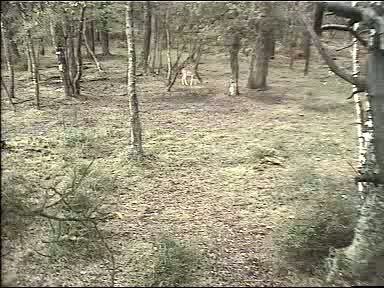 Fallow Deer Cam from New Forest (Lyndhurst, UK) Warning!!! You will see animal corpses here! 091008083500-00-17561