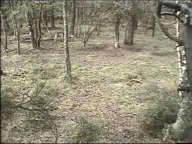 Fallow Deer Cam from New Forest (Lyndhurst, UK) Warning!!! You will see animal corpses here! 091008083500-02-32402