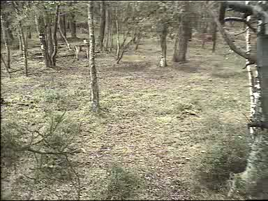 Fallow Deer Cam from New Forest (Lyndhurst, UK) Warning!!! You will see animal corpses here! 091008083500-02-40082