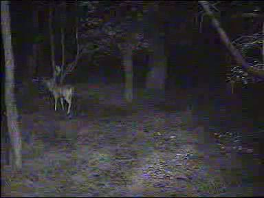 Fallow Deer Cam from New Forest (Lyndhurst, UK) Warning!!! You will see animal corpses here! - Page 2 091011072500-04-05965