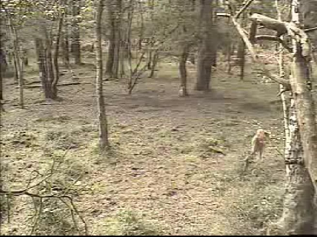 Fallow Deer Cam from New Forest (Lyndhurst, UK) Warning!!! You will see animal corpses here! - Page 2 Snap453