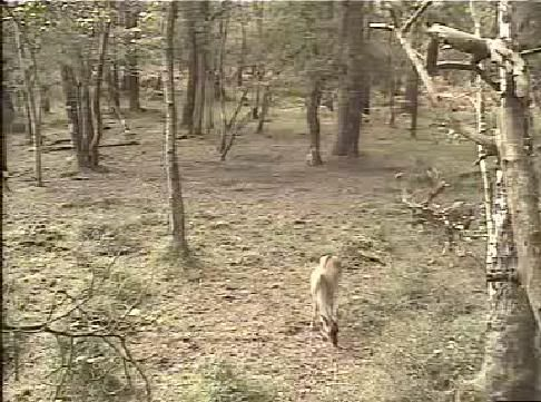 Fallow Deer Cam from New Forest (Lyndhurst, UK) Warning!!! You will see animal corpses here! - Page 2 Snap455