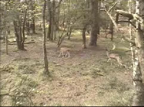 Fallow Deer Cam from New Forest (Lyndhurst, UK) Warning!!! You will see animal corpses here! - Page 2 Snap460